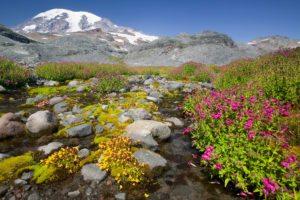 Sensitive Plant Species