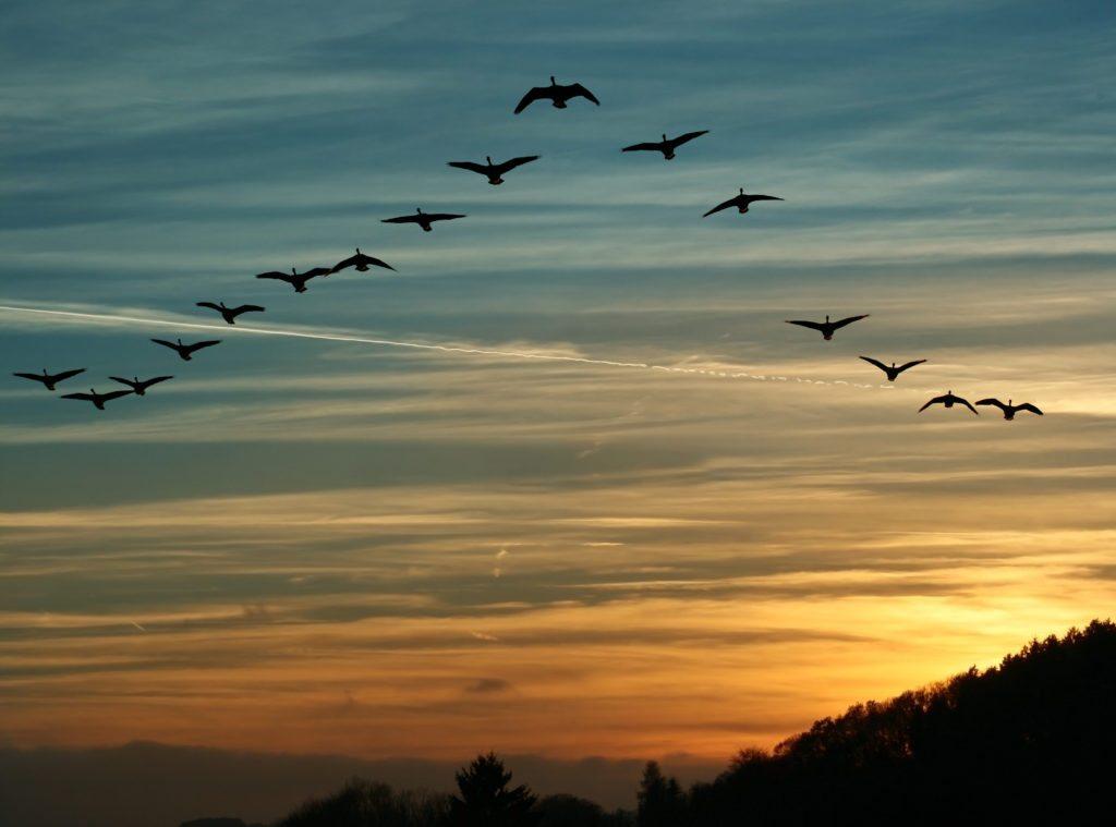Migrating Bird surveys