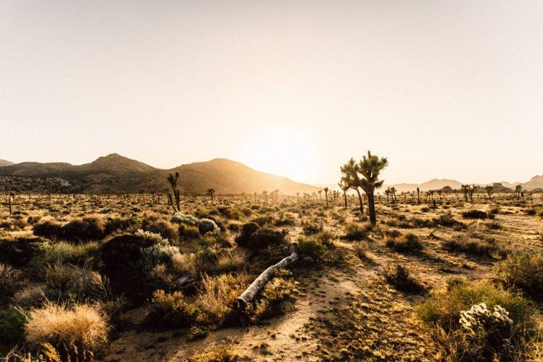 Landscape of California desert